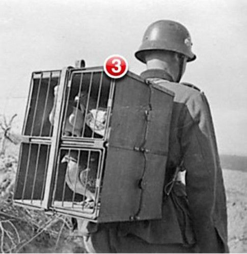 funny-pigeon-messengers-soldier